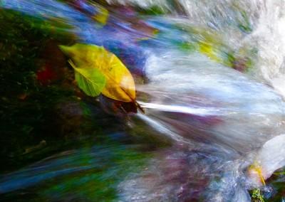 Leaf in River Flow
