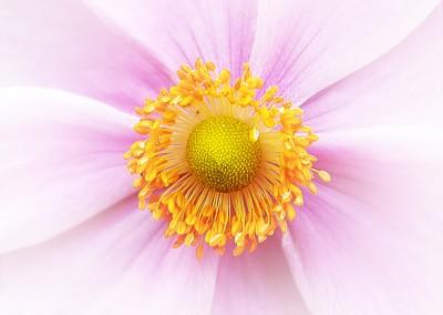 Flower Centre Soft Macro. Copyright Creative Bytes.