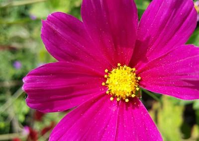 Purple Flower Macro. Copyright Creative Bytes.